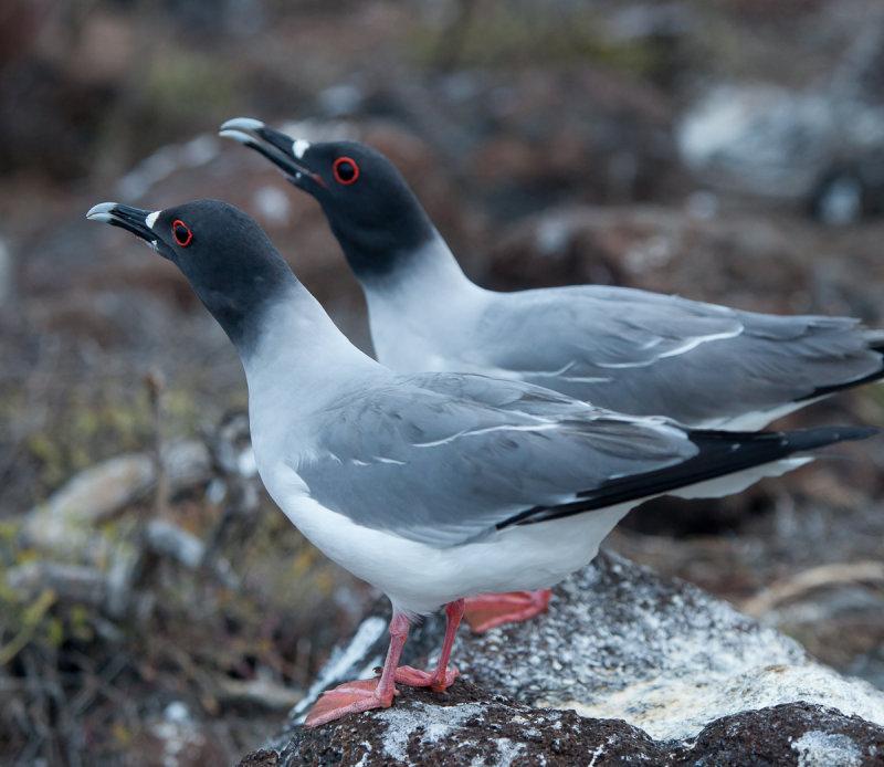 13-05 Galapagos 24.jpg