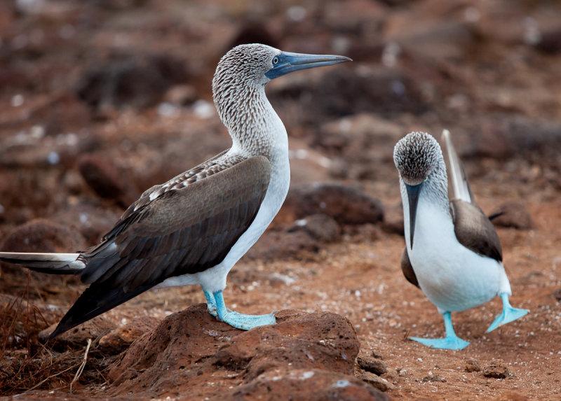 13-05 Galapagos 26.jpg