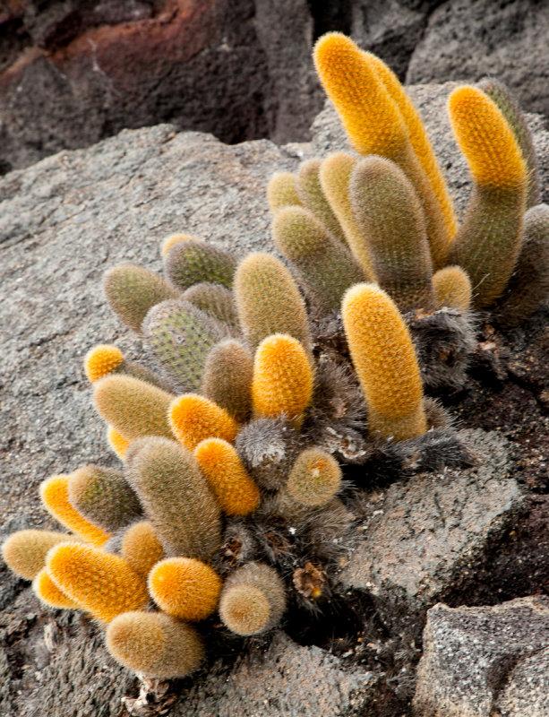 13-05 Galapagos 35.jpg