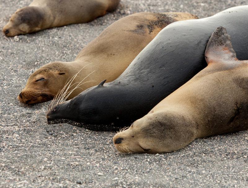13-05 Galapagos 40.jpg