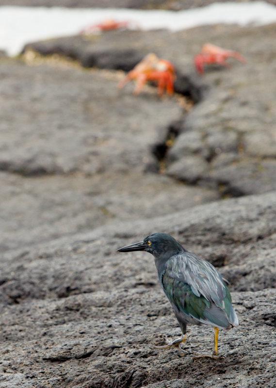 13-05 Galapagos-417.jpg
