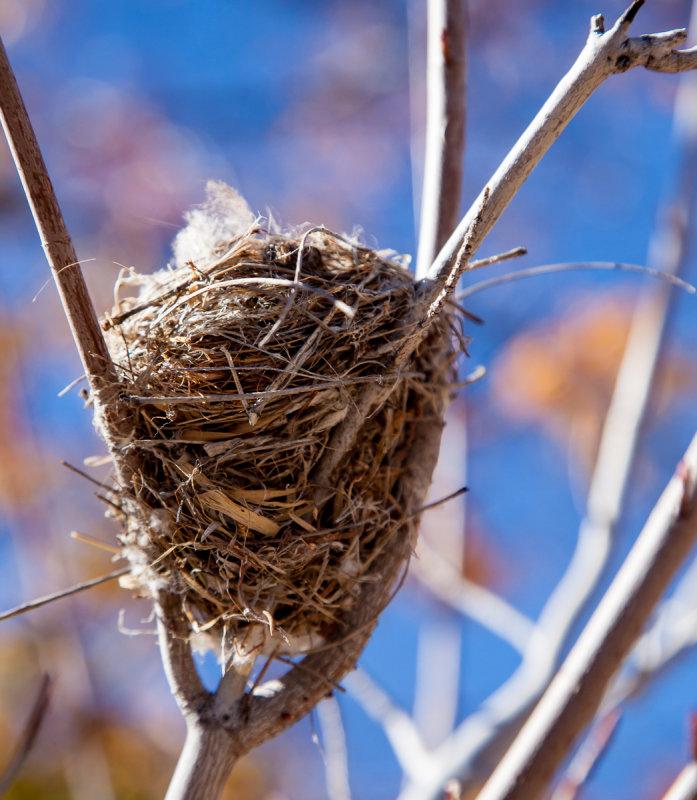 13-10 Humingbird nest.jpg