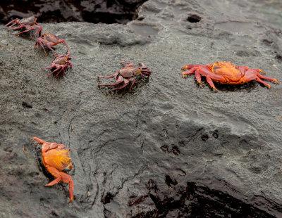 13-05 Galapagos 14.jpg