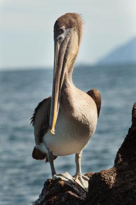 13-05 Galapagos 21.jpg