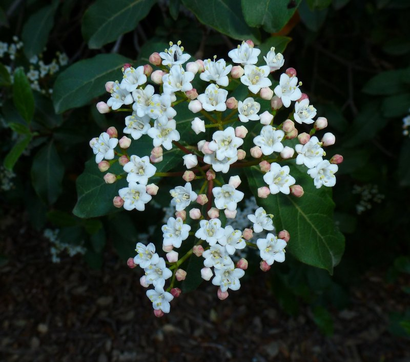 Flowering shrub in the canyon