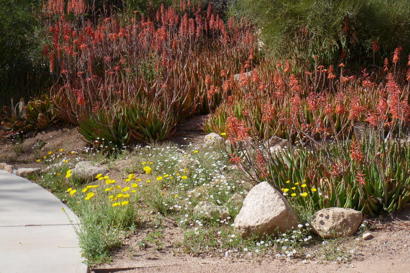 Aloes in the Childrens Garden