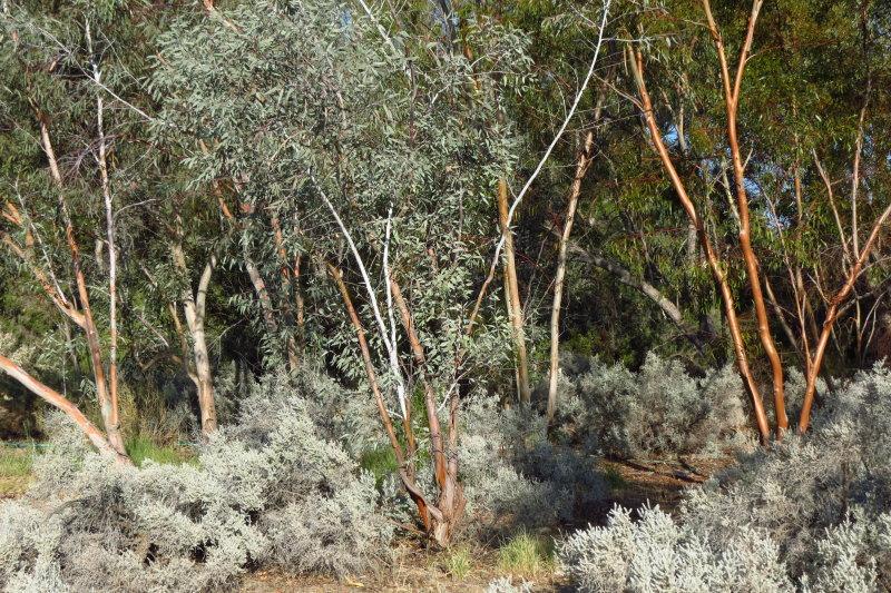 Looks Like Australia - Blue Bush Trail