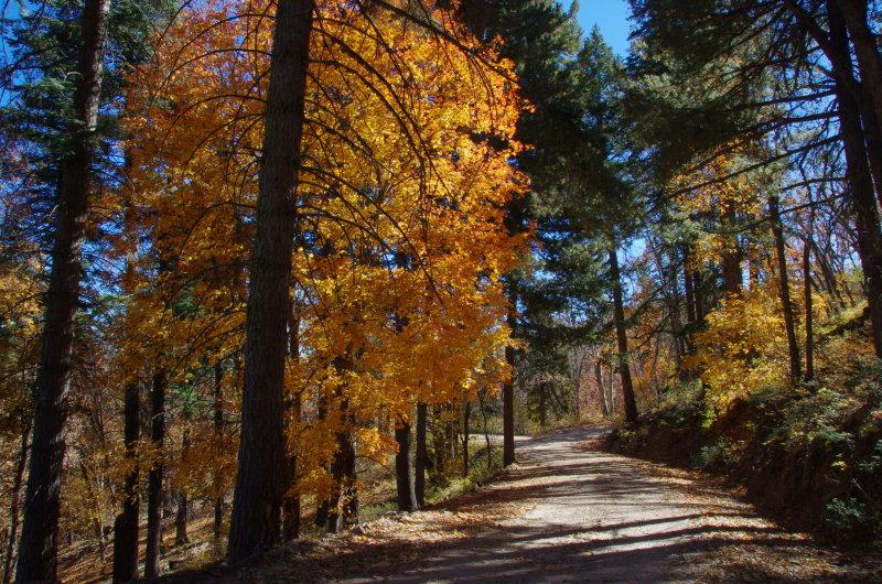 Along Ferndell road