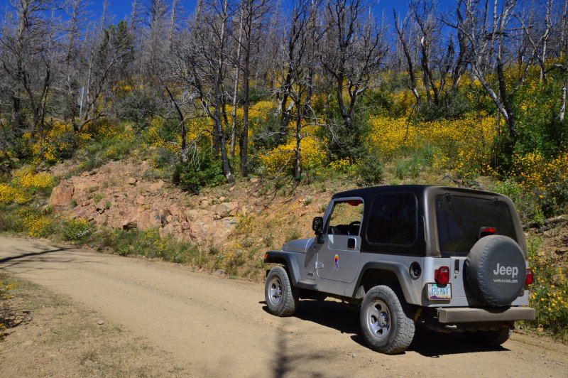 The Jeep on FR 42 in the Horseshoe Two Burn area, Chiricahua Mountains