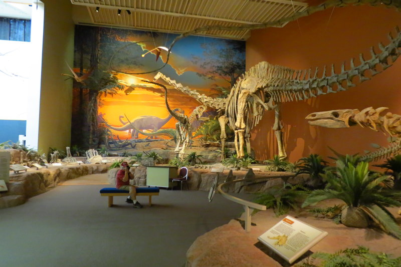 New Mexico Museum of Natural History and Science. Saurophaganax and Brachiosaurus