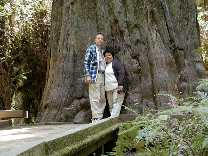 2003 Redwoods
