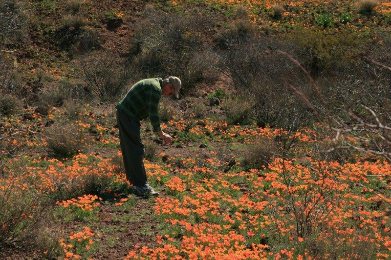 2012 Johnny taking photo of poppies at Peridot Mesa. San Carlos Reservation