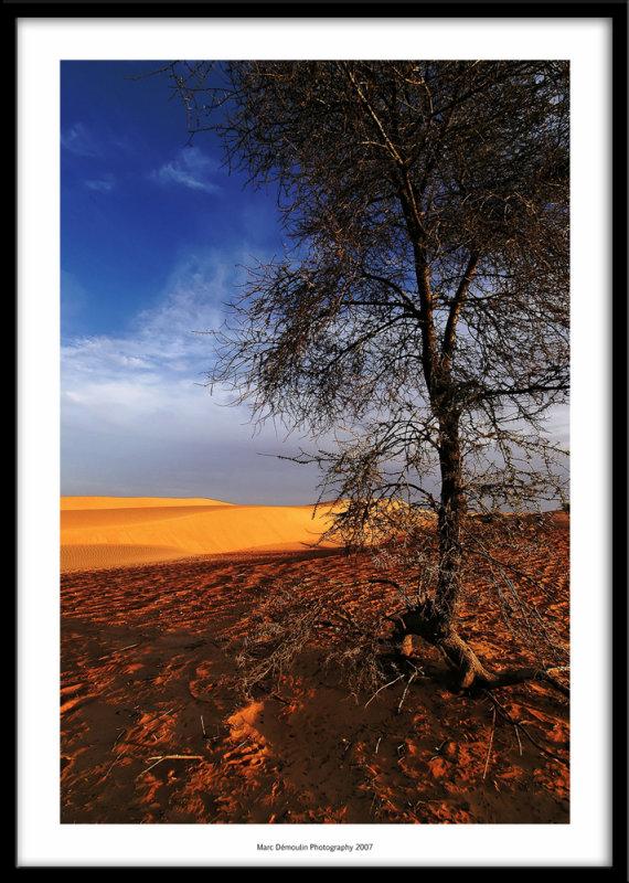 Tenadi oasis, Mauritania 2007