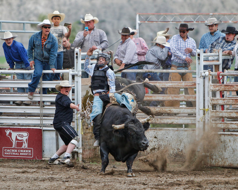 Bull Rider II