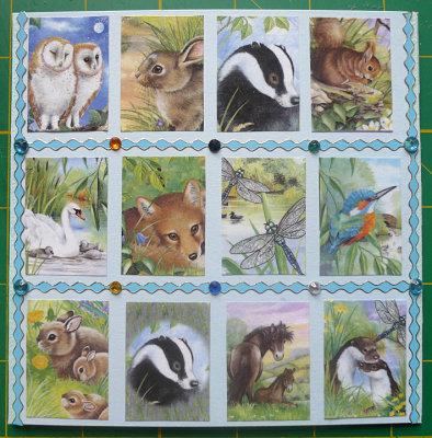 Wildlife montage