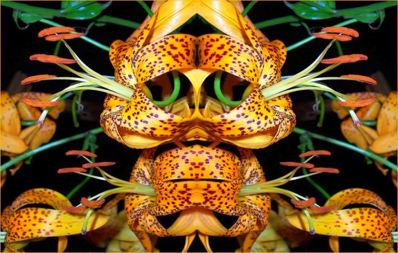 Leopard Lily Mask