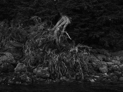 Aftermath, Pybus Bay, Alaska, 2013