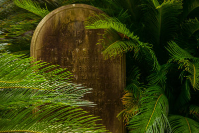 Life and death, St. Philip's Graveyard, Charleston, South Carolina, 2013