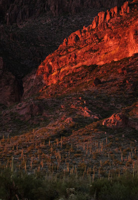 Desert contrasts, Peralta Canyon, Arizona, 2014