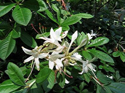Running Arborescens