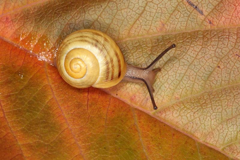 snail - polž (_MG_0130m.jpg)