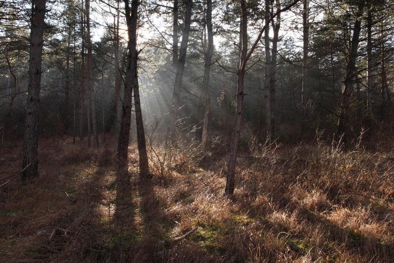 sun light in forest - magic forest - sončni žarki v gozdu - čarobni gozd_MG_4126m.jpg