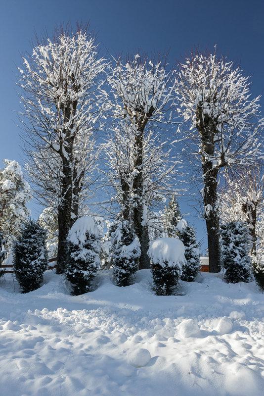 snow on trees (_MG_8410ok.jpg)