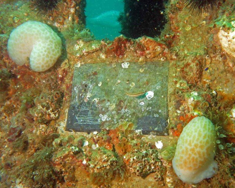 Plaque on Drews Reef