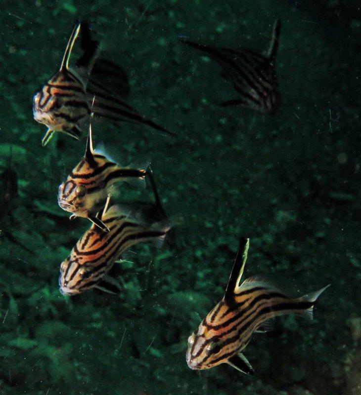 Squadron of Cubbyus
