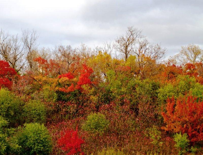 Fall Colors 4
