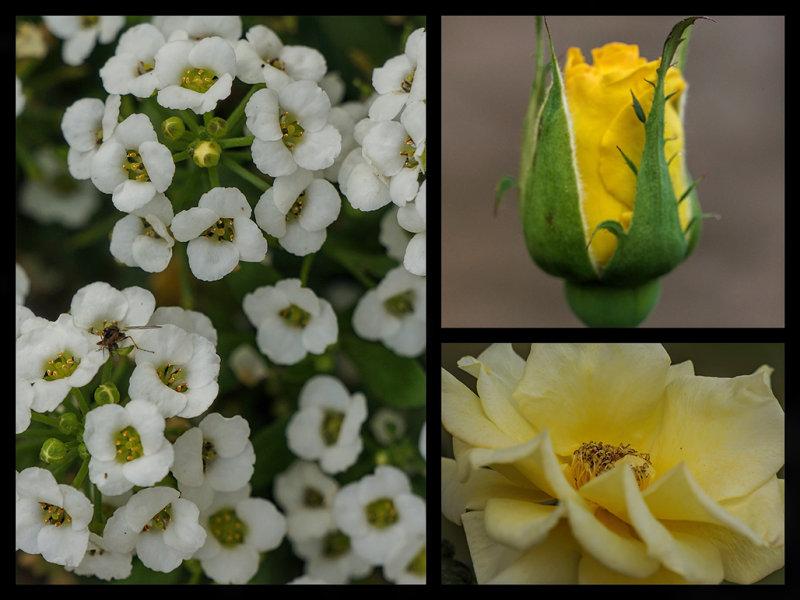 yellow and white macros.jpg