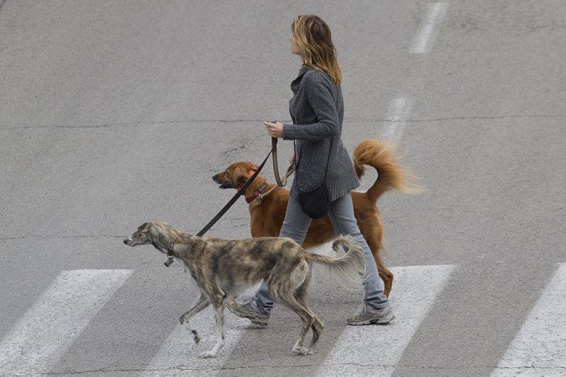 Tel Aviv Dogs