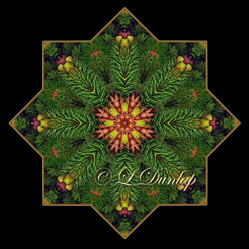 ** Spruce Needles With Cones -- Northwoods Kaleidoscope