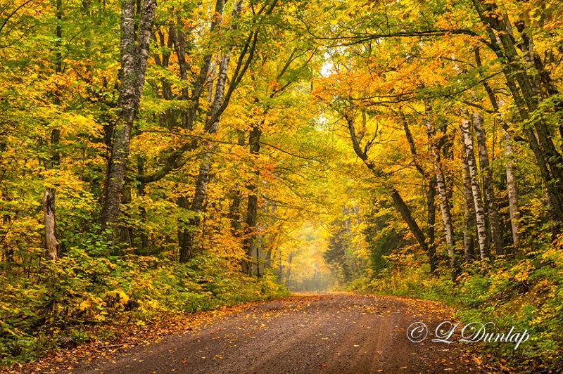 ** 83.5 - Sawtooth:  Mid-Autumn, Maple Leaf Drive