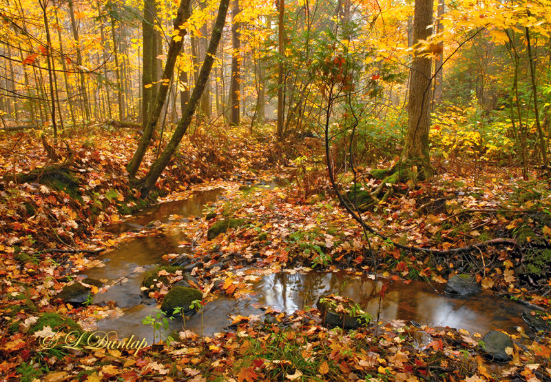 63.5 - Superior Township Countryside:  Autumn Maple Woods With Creek