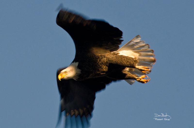 Eagle at Squaw Creek
