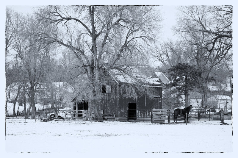 Winter Scene (Black & White)