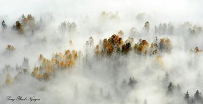 pastel colors of fall