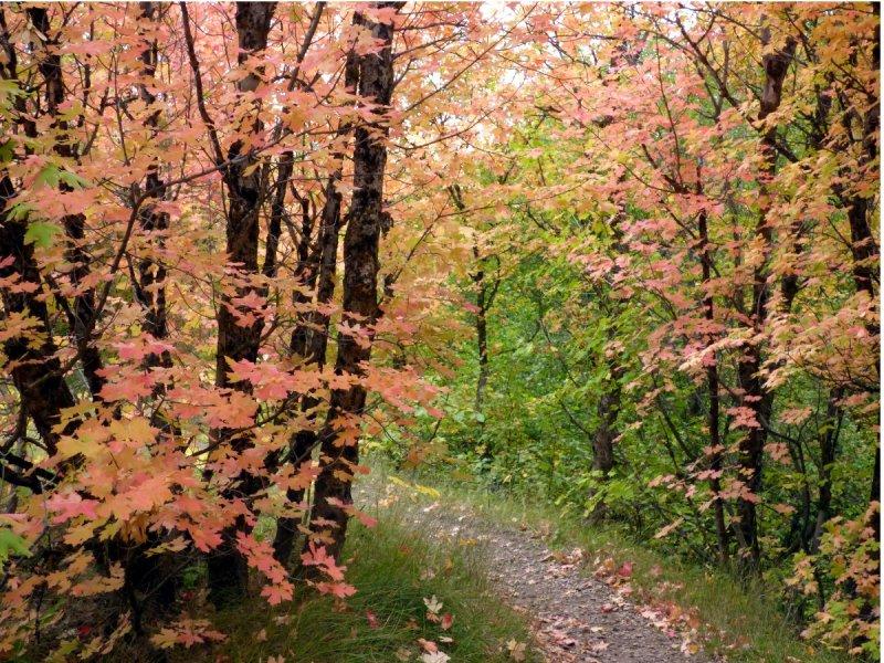 fall foliage at city creek pocatello P1000574.JPG