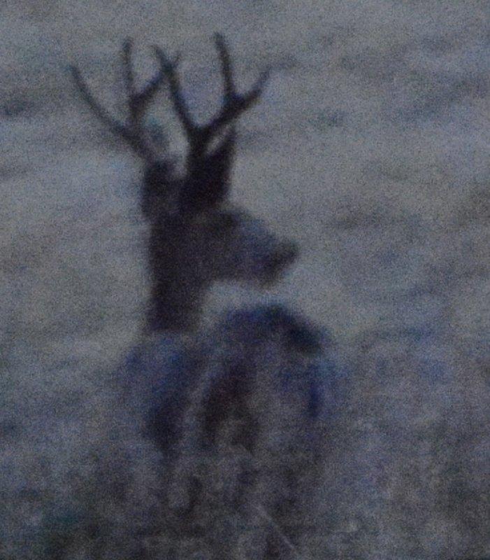deer after sundown _DSC3560.JPG