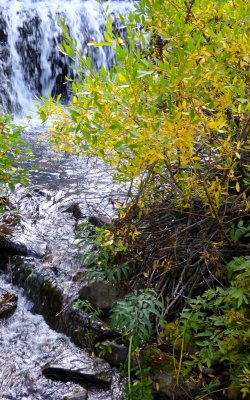 Changing Seasons at Gibson Jack Creek P1000292.jpg