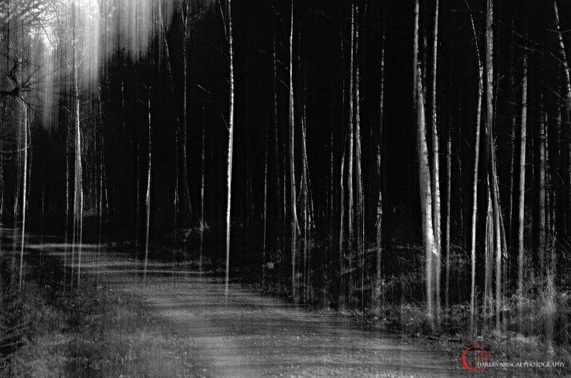 Les arbres rayés