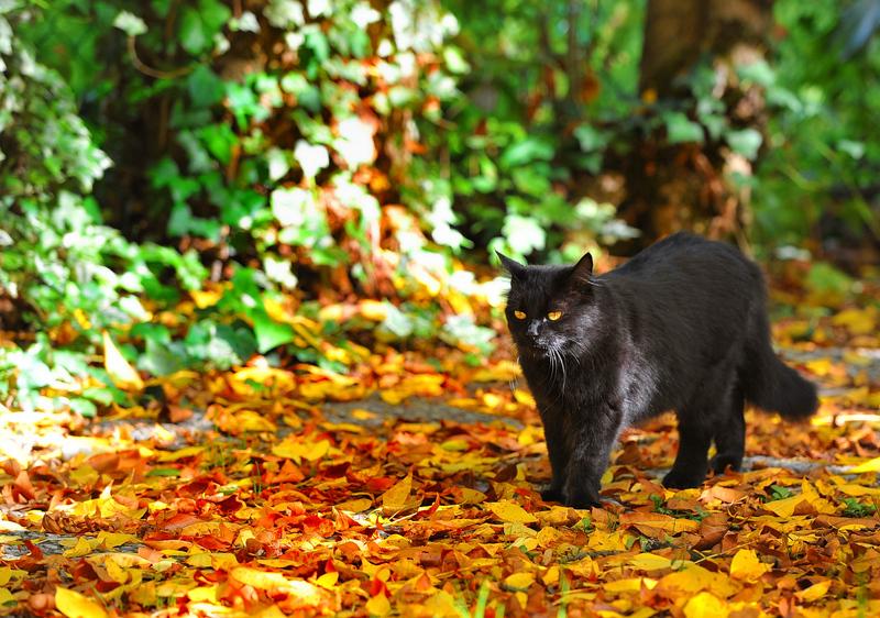 Welcome Fall...