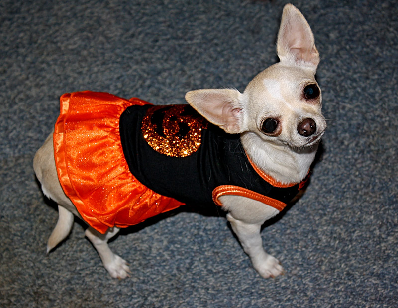 Happy Halloween from Mouse!