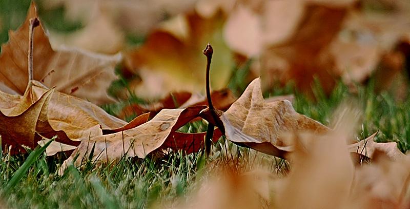 Prehistoric Pterodactyl Leaf