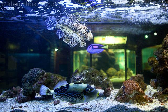 Aquario de Ubatuba, Sao Paulo, 8879.jpg