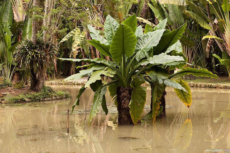 Botanical Gardens: Pond and Tropical Plants
