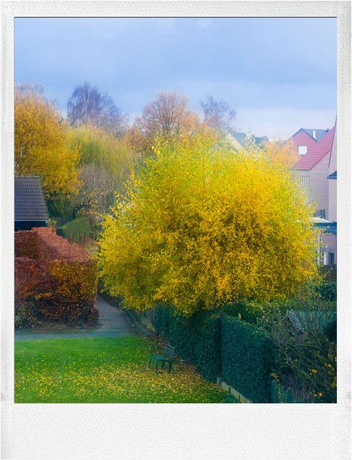 This is Belgium on 27 november 2011 !!  Wintertime !!