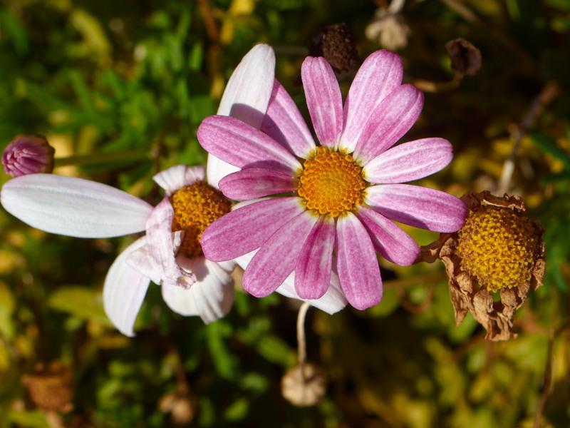 2011-10-24 Three flowers