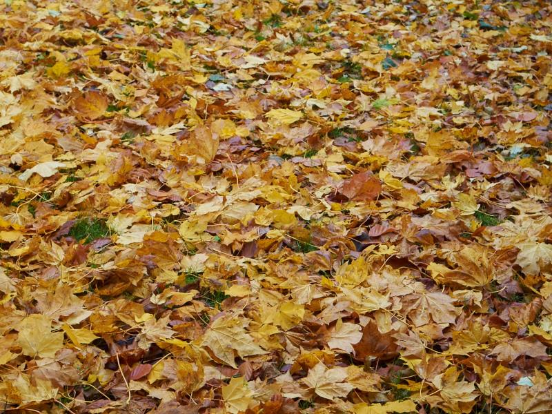 2011-11-04 Fallen leafs